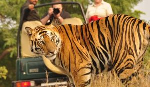 Before booking of Jeep Safari check best resorts in Corbett National Park
