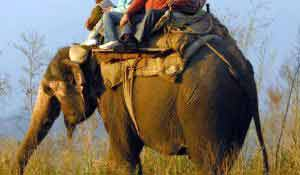 Elephant Safari – also find here Jim Corbett best resorts and discount on Corbett Resorts booking