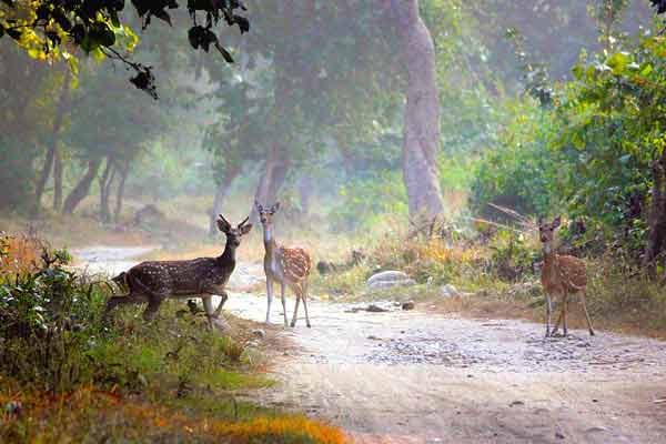 about-corbett-national-park