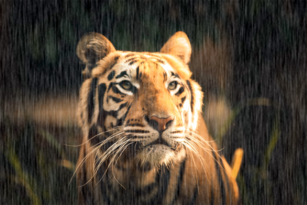 Jim Corbett trip during Monsoon
