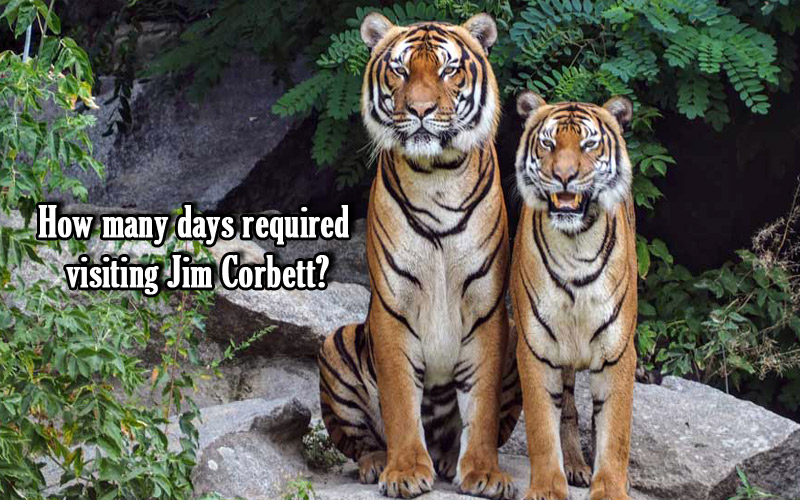 how many days are sufficient to stay in Jim Corbett National Park?