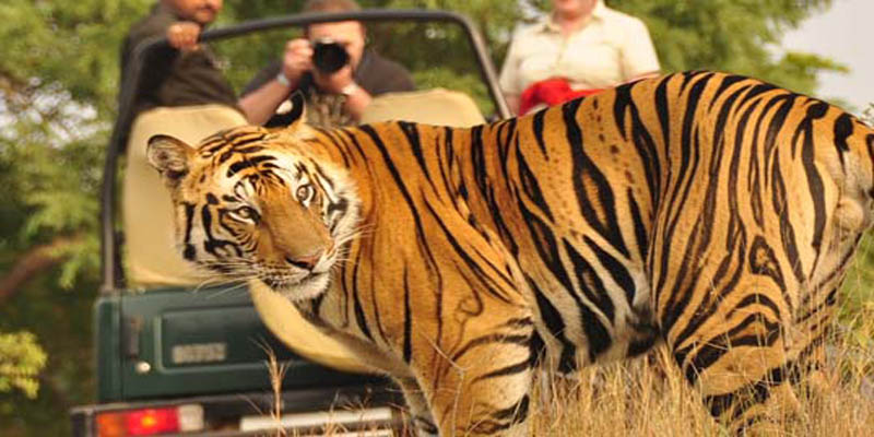 process of corbett jeep safari booking